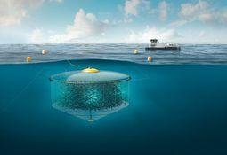 Atlantis apela luego de rechazo a dos de sus licencias de innovación