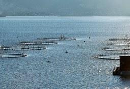 Skretting destaca Proyecto Pincoy e independencia de la harina de pescado
