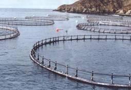 Salmones Humboldt pretende ampliar biomasa en Los Lagos