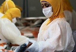 Lo nuevo de las Jornadas de Inocuidad para Salmonicultura
