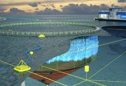 Innovación: Lerøy apuesta también por jaulas abiertas