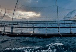 Confirman presencia de virus ISA en Islas Feroe