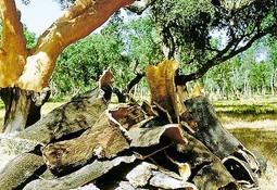 Aplicación de gránulos de corcho en el alimento reduce el nitrógeno amoniacal