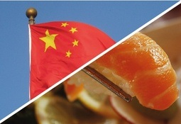 Chile doubles salmonid exports to China