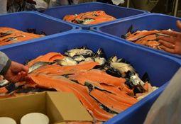 Un nuevo uso para los recortes de salmón