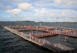 Investigan muerte de dos trabajadores del sector acuícola