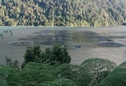 Bajo precio y florecimientos algales impactaron resultados de Camanchaca