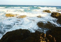 Reiteran solicitud para la creación de Ministerio del Mar, Acuicultura y Asuntos Marítimos