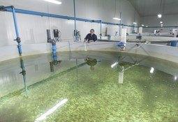 Ventisqueros proyecta potenciar sus activos en agua dulce