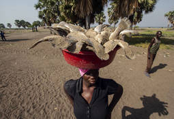 FAO apuesta por la sustentabilidad ante rápido crecimiento de pesquerías