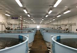 Aquachile potencia su negocio de tilapia en Costa Rica