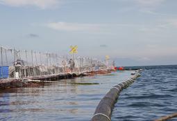 Pescadores artesanales: la normativa da mucha libertad a salmonicultores