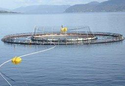 Estrategias preventivas para el control del piojo de mar en salmones
