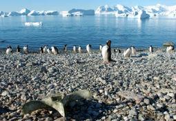 Pequeños pintores magallánicos visitaron monumento natural Los Pingüinos