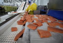 Chofer reconoce participación en autorobo de camión que transportaba salmones