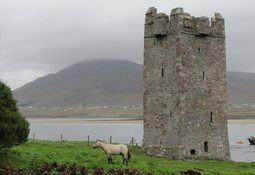 Ireland hosts top lice researchers
