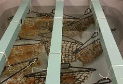 Fouling/fish disease link explored