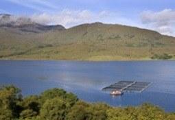 Scottish Sea Farms supports local show