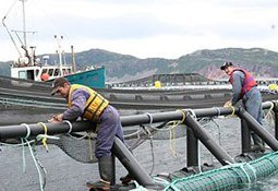 Labour shortages are costing Canadian aquaculture