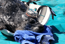 Study highlights impact of seals