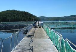 Multiexport's algal losses revealed