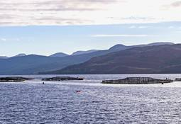 Scottish salmon export value hits £600m record