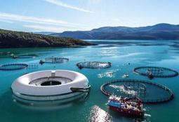 A concrete plan for salmon farming's future