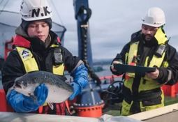 Fish survival better in all regions for Cermaq