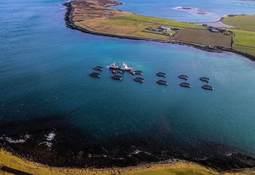Cooke Scotland profit steady despite smaller harvest