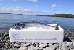 Wester Ross Fisheries increases profit to £1.4m