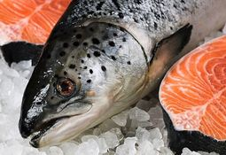 Chilean salmon production 'up 9% this year'