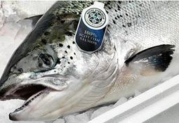 Record £72m income for Scottish Salmon Company