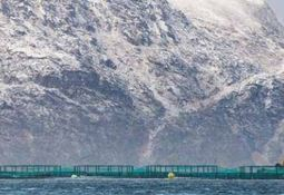ISA suspected at Grieg farm in northern Norway