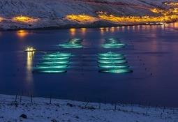 Bakkafrost building world's largest smolt farm