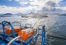Lerøy unveils microalgae feed deal with BioMar
