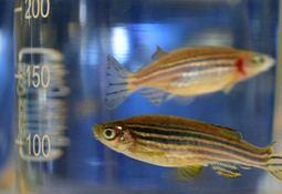 Vitamin deficiency hits fish fertility