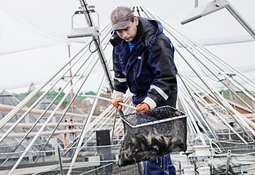 Salmar Nord og Rauma Stamfisk forsvinner