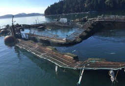 Cooke 'committed' to US state despite salmon ban