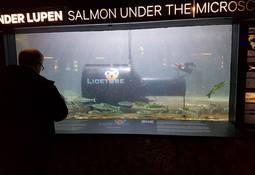 Tester ut ny avlusingsenhet på Akvariet i Bergen