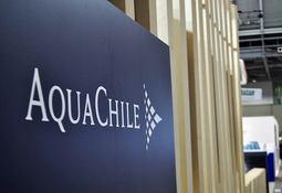 Los Lagos: Grupo AquaChile reactivará su piscicultura Cordillera