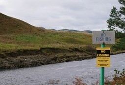 £500,000 for wild salmon research