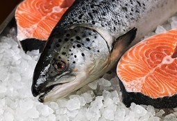 Salmon help push exports to £6 billion record