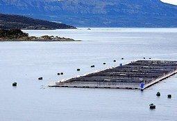 USACh realiza talleres de mejoras productivas en acuicultura
