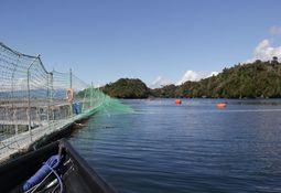 Presentan nueve solicitudes de relocalización y fusión de concesiones de salmón