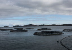 Fish farmer 'taking all measures possible' at Loch Roag says Scottish SPCA