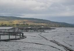 Scottish aquaculture compliance levels fall