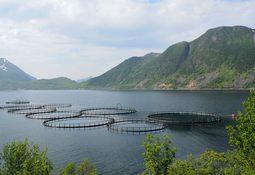 Veterinærinstituttet med rapport på antibiotikabruk i fiskeoppdrett