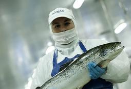 Profits rise for Chilean salmon farmers
