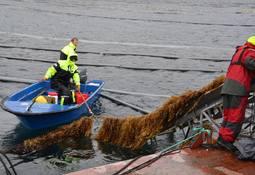 Havtare får etablere tareoppdrett