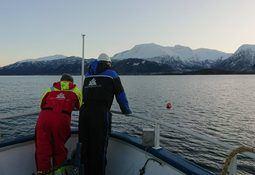Iskaldt hav fører til mindre lakselus i vest